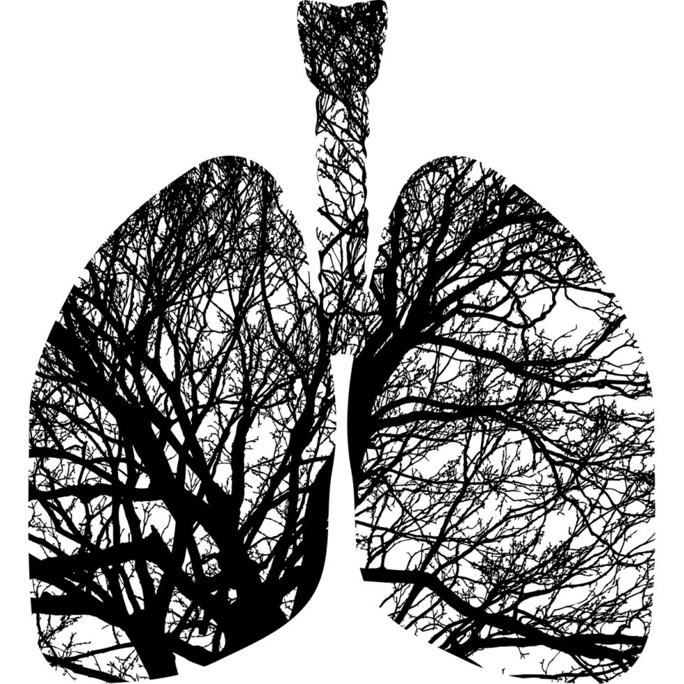 Для дыхательной системы