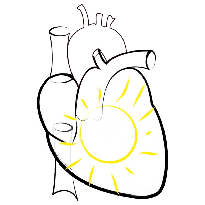 Для сердечно-сосудистой системы
